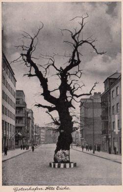 Dąb w 1942