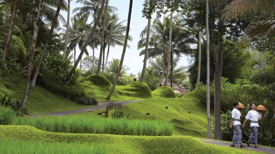 Rice Fields at Four Seasons Bali Sayan