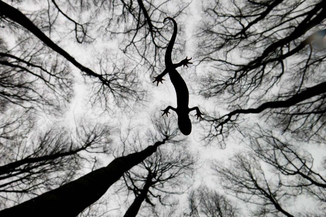Still life Edwin Giesbers winner of Natural History Museum Wildlife Photographer of the Year 2015