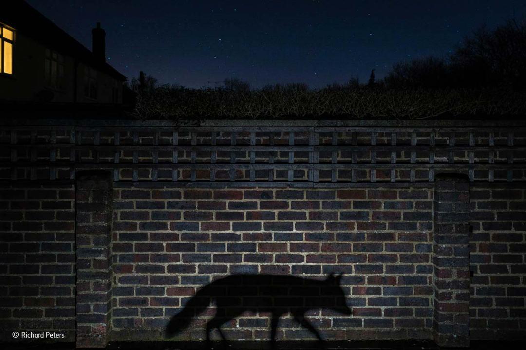 Shadow walker Richard Peters winner of Natural History Museum Wildlife Photographer of the Year 2015