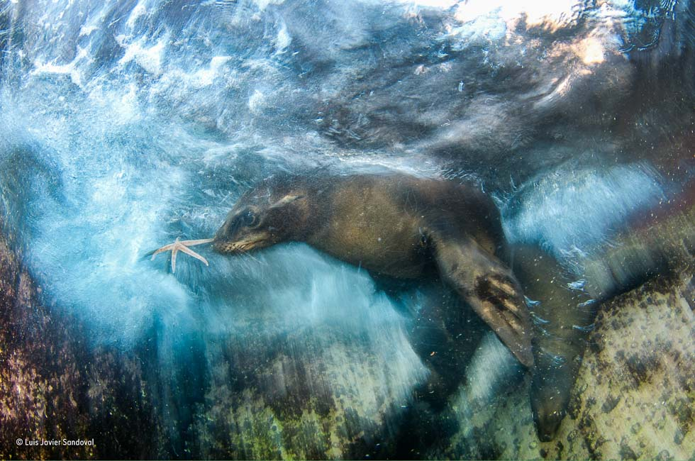 Star Player Wildlife Photographer of the Year 2016
