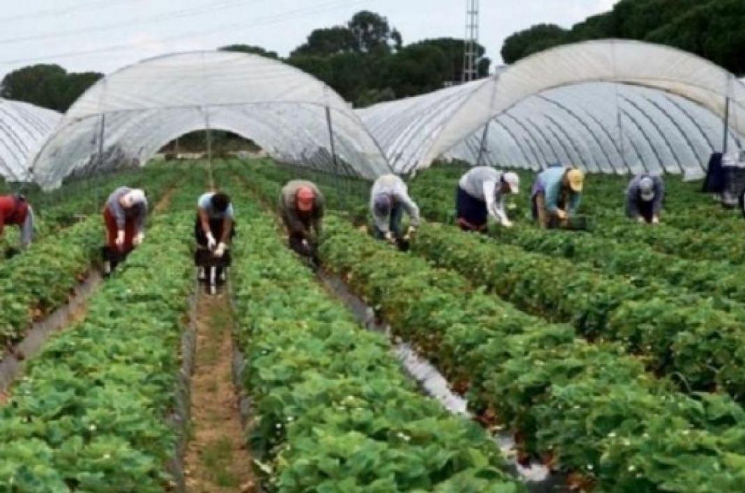 În plină pandemie, Germania va permite muncitorilor străini să intre în ţară şi să ajute la recoltatul fructelor şi legumelor