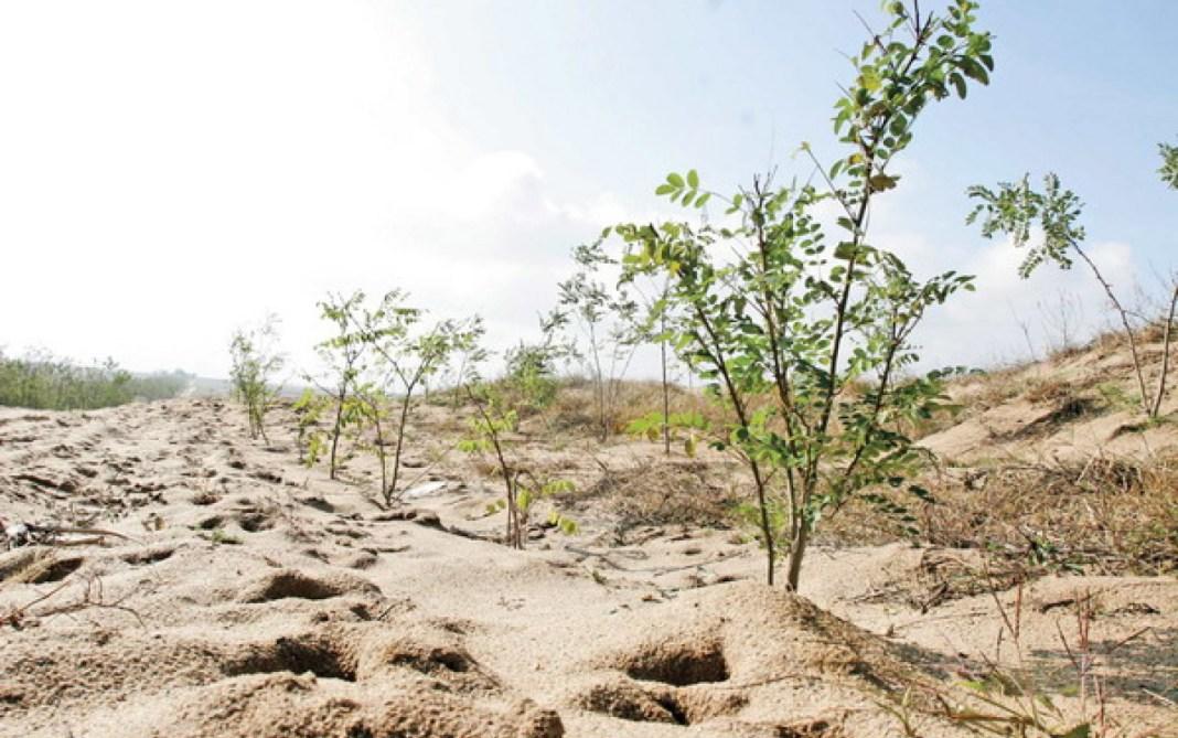 Președintele va participa la campania de împădurire pe terenuri nisipoase și degradate din sudul României