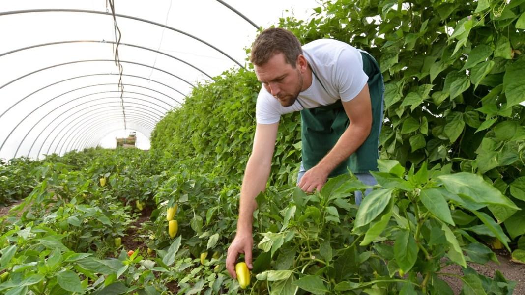 Ajutor nerambursabil de până la 50.000 de euro pentru tinerii fermieri ce revin din străinătate