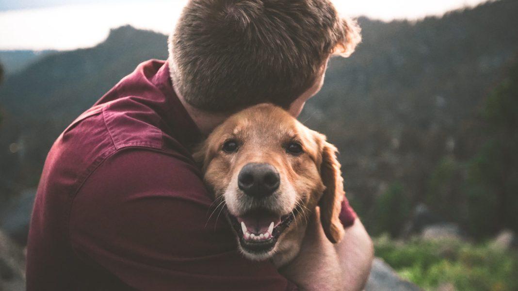 Campanie de adopţie la Adăpostul canin Breasta