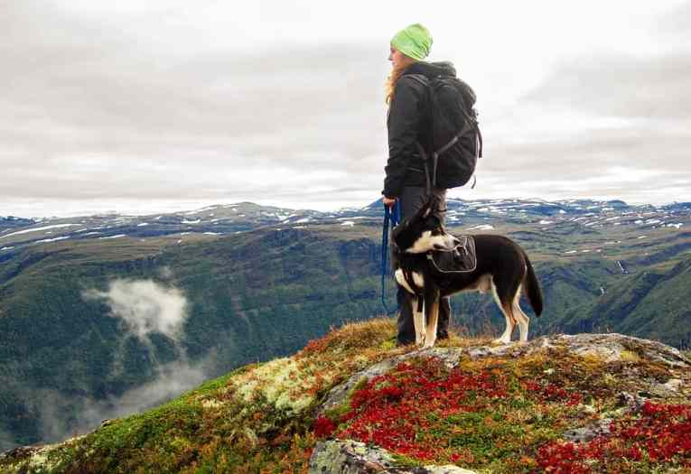 best dog leashes for hiking