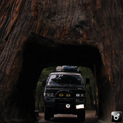 Ari's Delica: Bigger than the biggest tree! (Or hole through the biggest tree!)