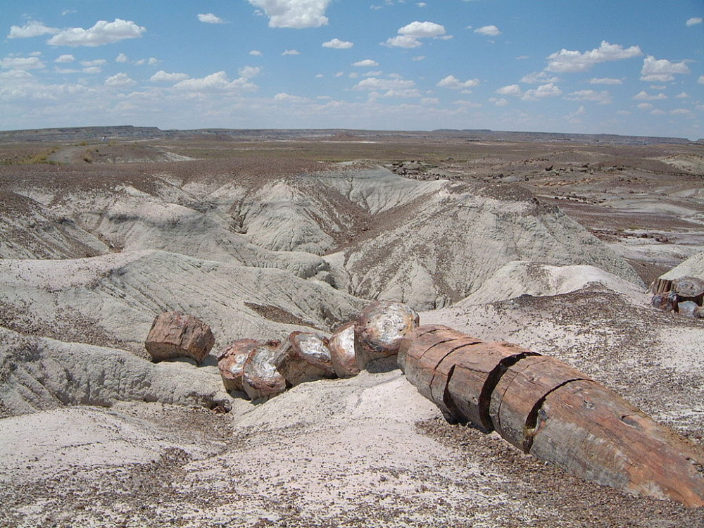 Petrified Forest | image: Wikipedia