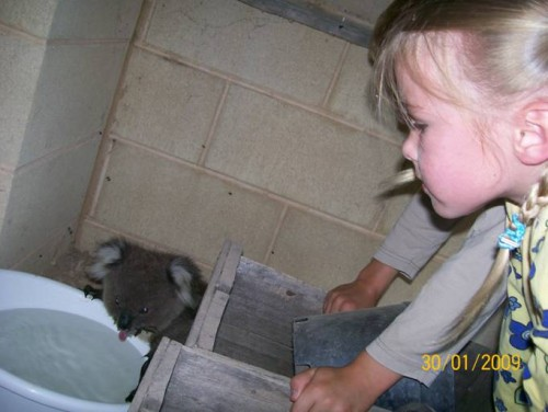 koala_in_bucket_01