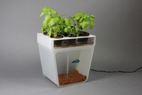 Home Aquaponics Kit: A Self-Cleaning Fish Tank that Grows Food