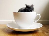 A Really, Really Big Coffee Mug | Gearfuse