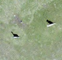 Dinosaurs in Google Earth
