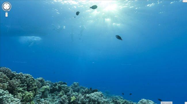 underwater-image