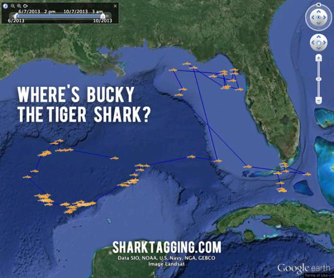 tracking sharks in google earth