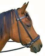 Cavallo Artikel: