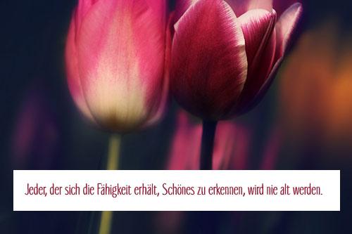 Blumenbild mit kurzem Zitat