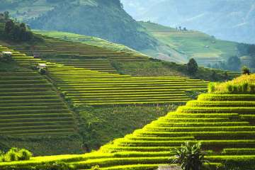 Rice terraces Sa Pa Vietnam