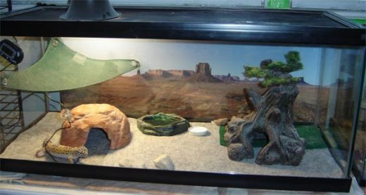 Best Substrates for your Leopard Gecko - Reptile Stuff
