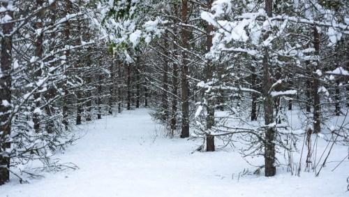 Puuvuori - Tree Mountain by Agnes Danes