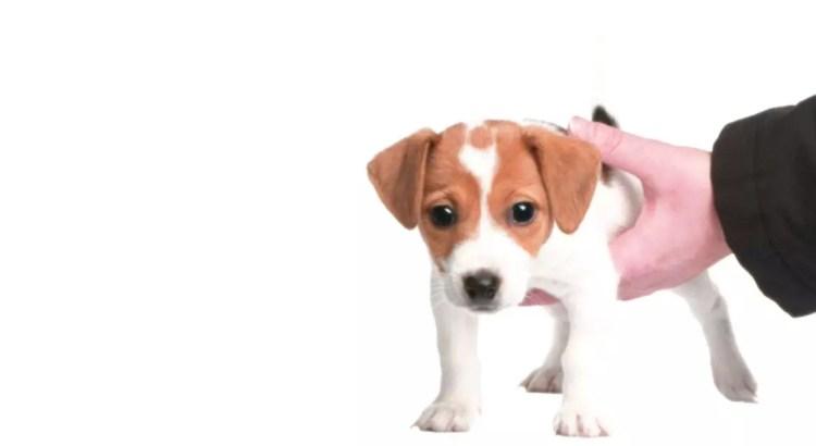 adoptar un cachorro