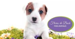 curso flores de bach para animales perros