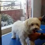 peluqueria canina en barcelona can duxer