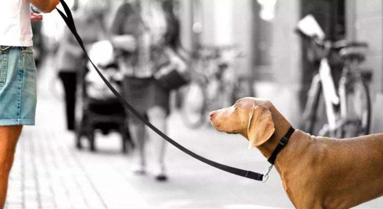si tu perro tira de la correa lo puedes solucionar