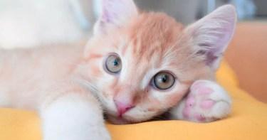 Cómo convivir con un Gato