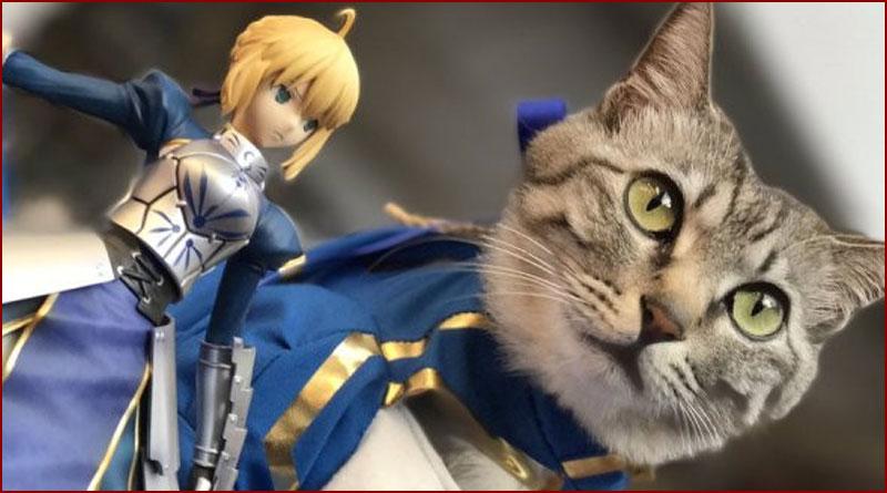 Un chat cosplayé en Saber !