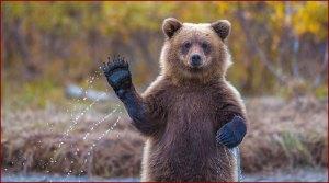 [sketch] Attaque d'un ours en direct