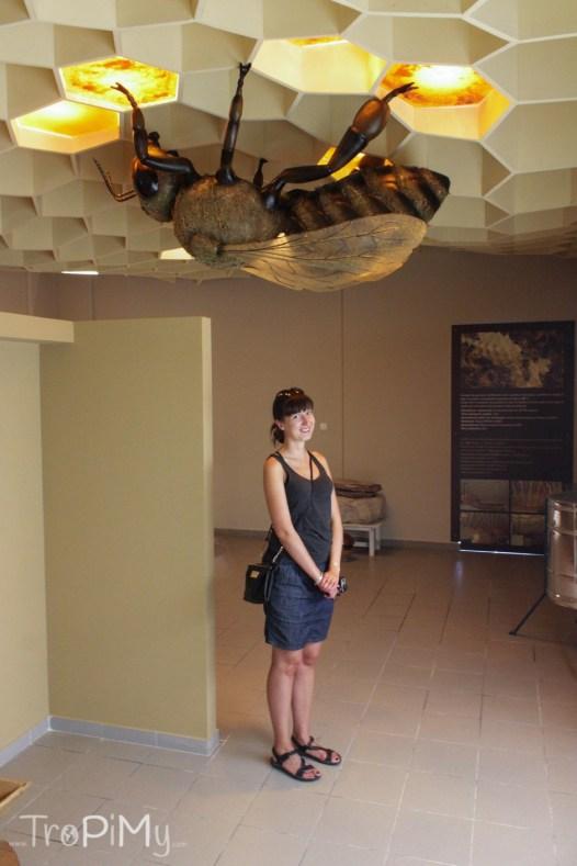 Muzeum Miodu, Rodos