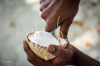 To już stary kokos - jego miąższ jest tak twardy, że można go kroić.