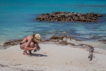 Podglądając kraby