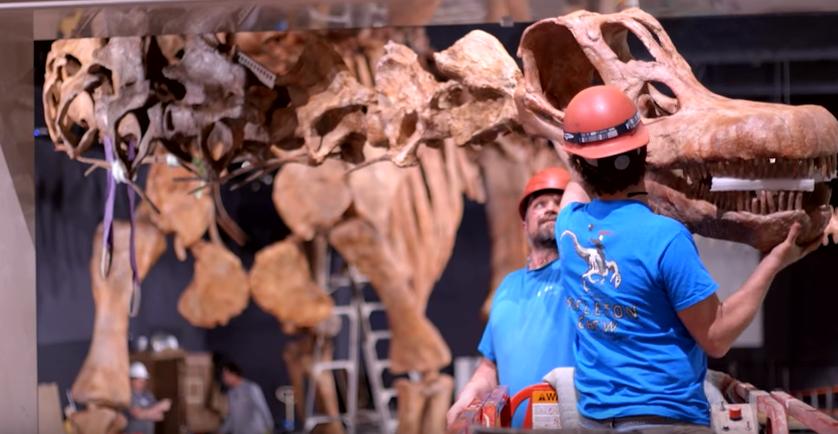 Titanosaur Biggest Dinosaur Skeleton