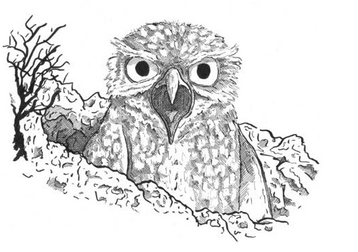 Railsea - Illustration of a Burrowing Owl