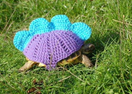 Mossy Tortoise Stegosaurus