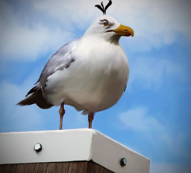 natural_angrybird_egg_bomber_by_mohamedraoof-geekorner
