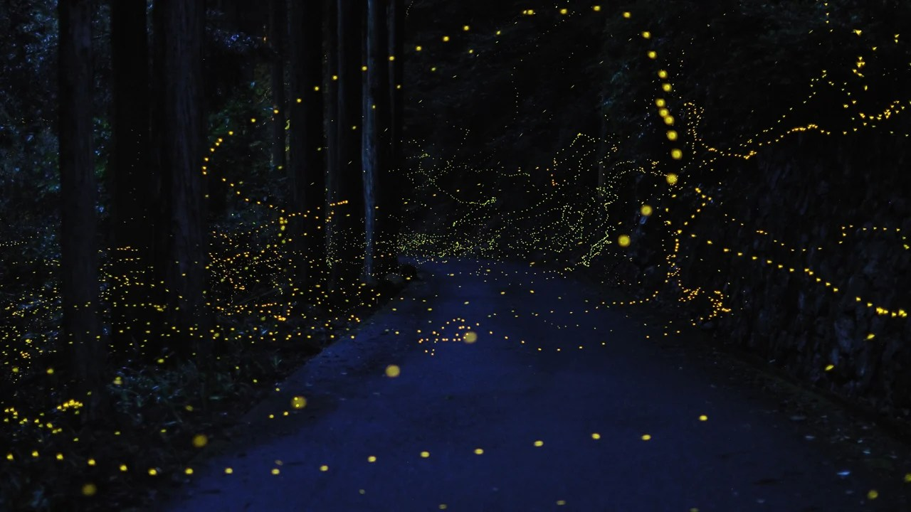 Image result for firefly animal