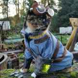 cosplay animaux chien chat souris (6)