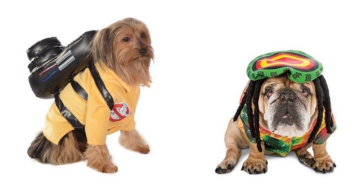 Sélection de déguisements parfaits pour votre chien