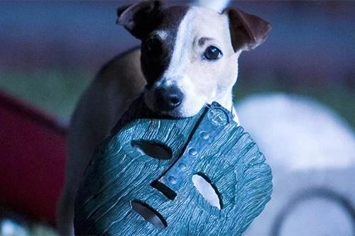 Cachorro do Máskara