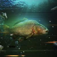 Play This Awesome Catch Carp & Coarse Fishing Game Right Now