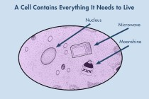 cellcontents
