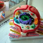 Biology Cell Cake by Nicole William
