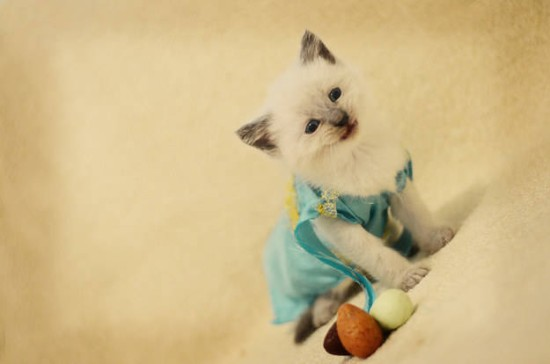 Dany kitteh 1