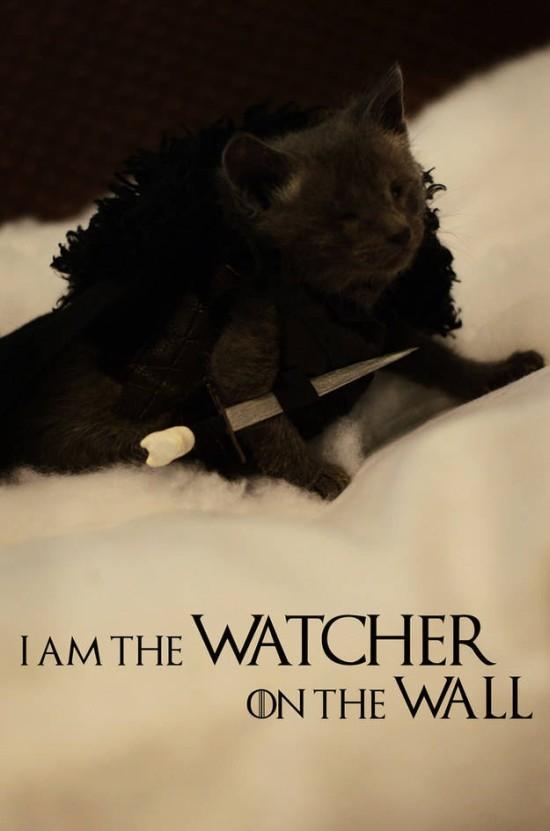 Jon Snow kitteh 1