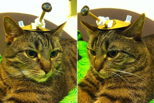 catsd