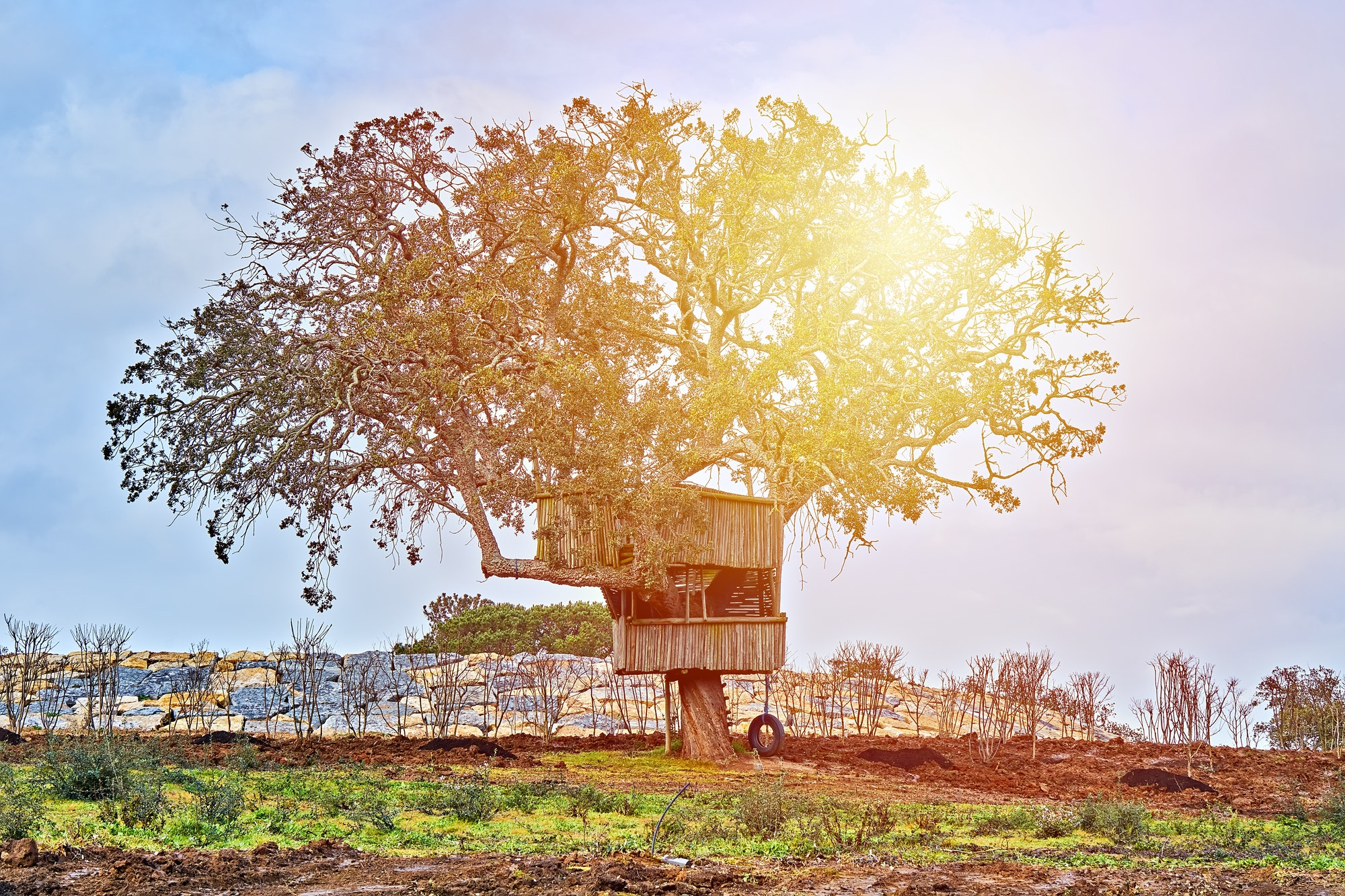 Tree and small treehouse in backyard against blue sky. Happy childhood in countryside concept