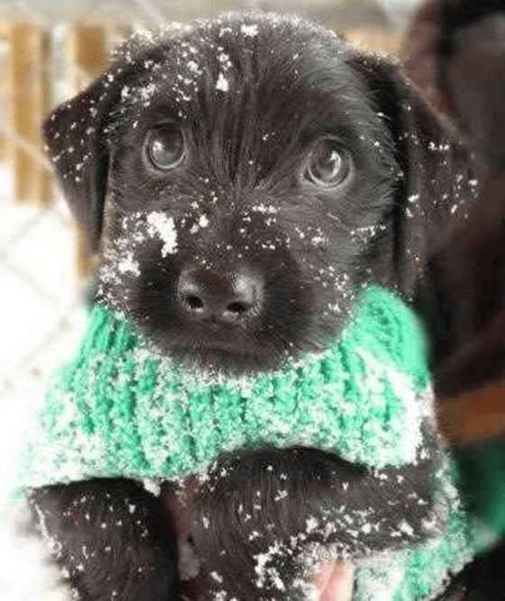 Cute puppy covered in snow
