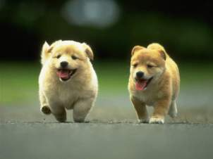 Cute puppies racing each other